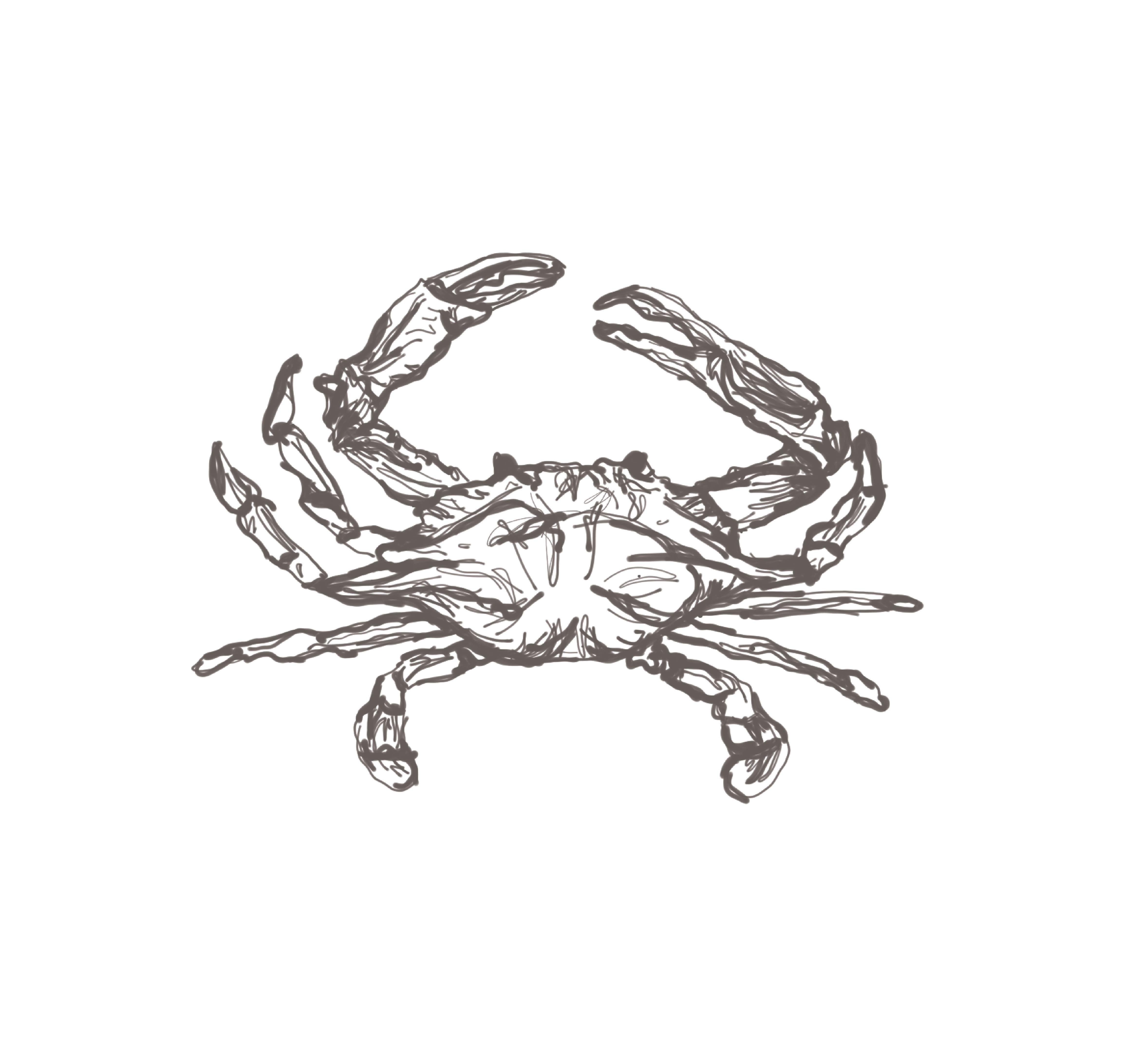 Adobe Draw with iPencil on iPad, Crab for Wedding Invitation
